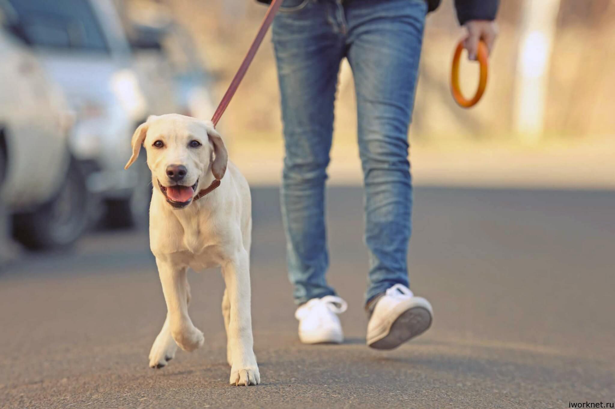 подросток выгуливает собаку